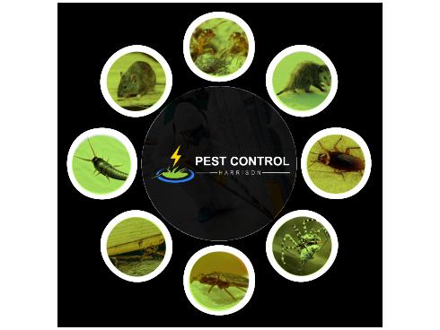 Pest Control Harrison