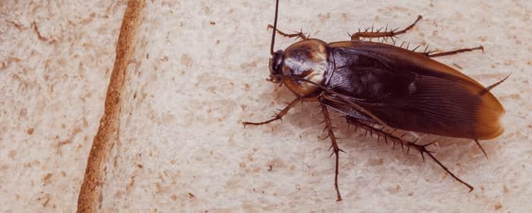 Cockroach Control Harrison