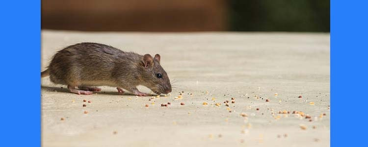 Rodent Control Harrison